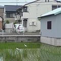 Photos: hinokuchi_0507