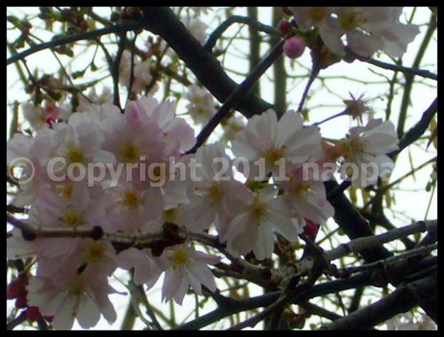 写真: P2650981