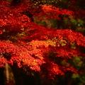 Photos: 『燃え上がる秋。。。』