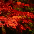『燃え上がる秋。。。』