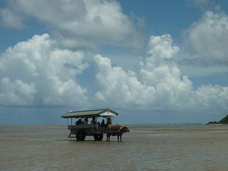 由布島の牛車