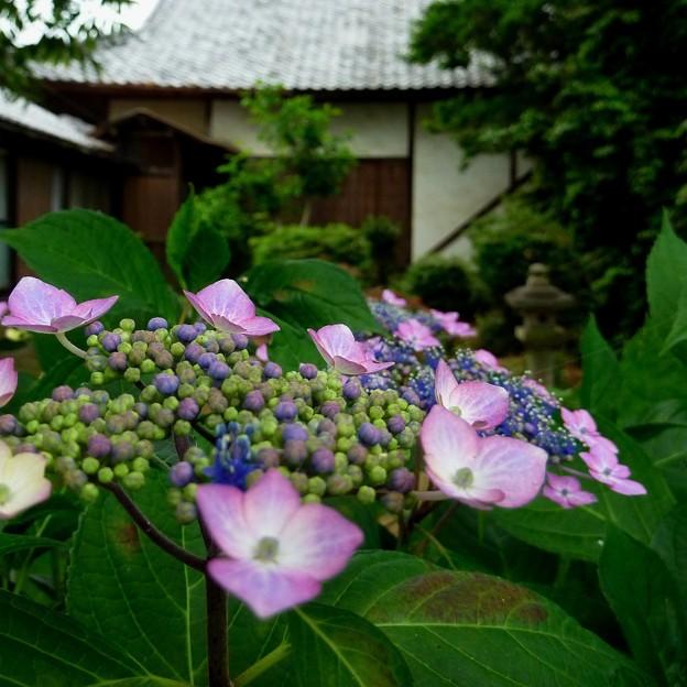 Photos: 裏庭