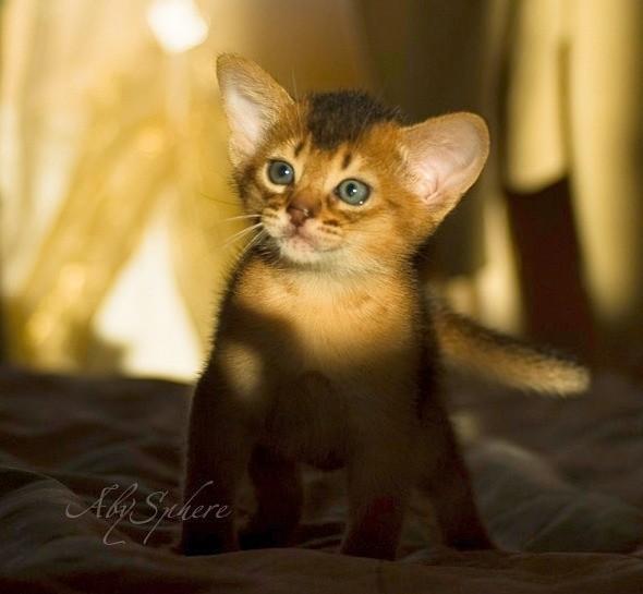 kitten1026_12