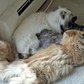Photos: kitten1044_16