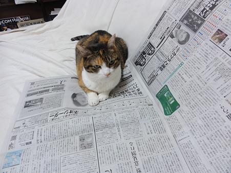 新聞を読むミミ