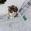 Photos: 新聞を読むミミ