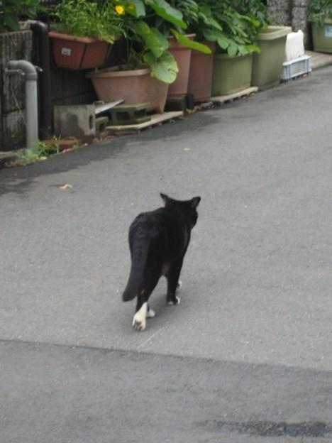 ソックス猫 003