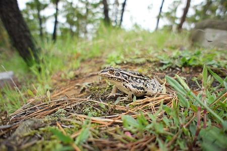frog04272011nex5-02