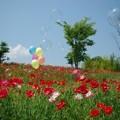 Photos: IMGP3862_0527