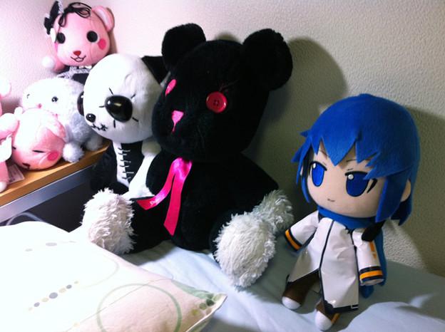 写真: KAITOお持ち帰りー♪
