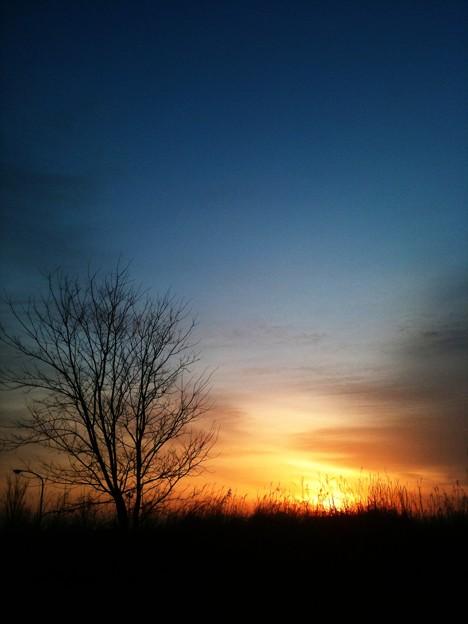 写真: 春燃ゆ