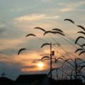 Photos: 秋の夕暮れ時