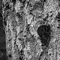 Photos: 樹液を求め・・・