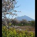 Photos: 桜と菜の花と筑波山