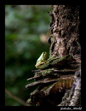 森にかえる