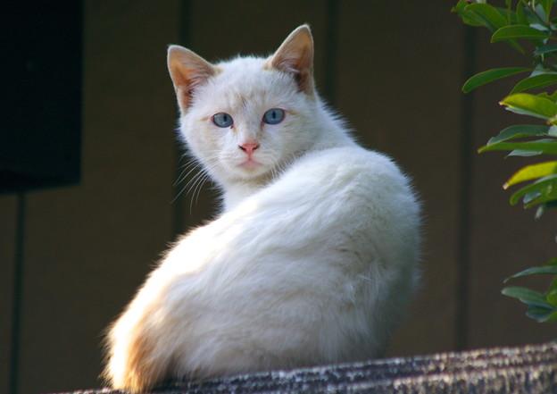 青い目の美少年
