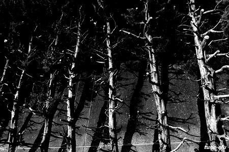 対馬にて・・壁沿いの木