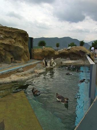 20110815 海響館 ふれあいエリア04