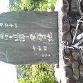 Photos: 鯉のぼり橋渡しって四万十川...