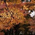 Photos: 2010京都植物園秋04