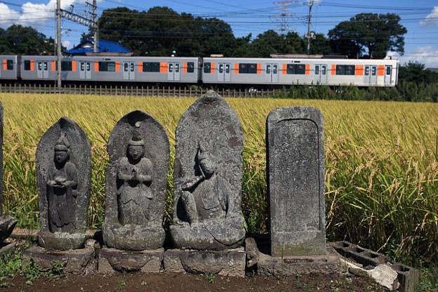 C1274T列車