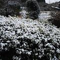写真: 宮崎市でも初雪2
