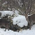 ????: 雪のえびの高原5