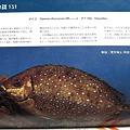 Photos: 1978.4釣り人 (5)