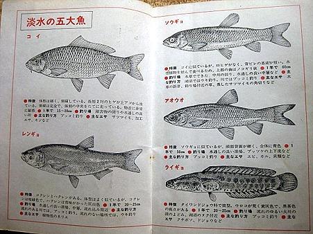 淡水の五大魚