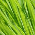 葉 と 草