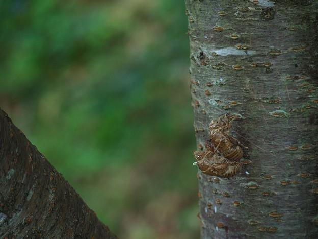 Photos: 木陰でイチャイチャ♪ 2