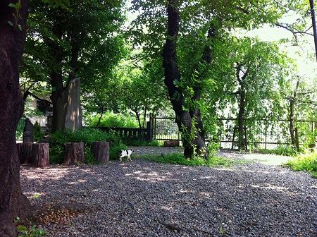 7月の亀ヶ岡八幡宮3
