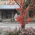 Photos: 12月13日「紅葉」