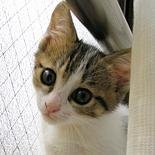 white_the_cat