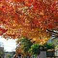 Photos: Breezy Autumn Day