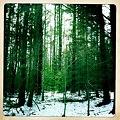 Norwegian Woods