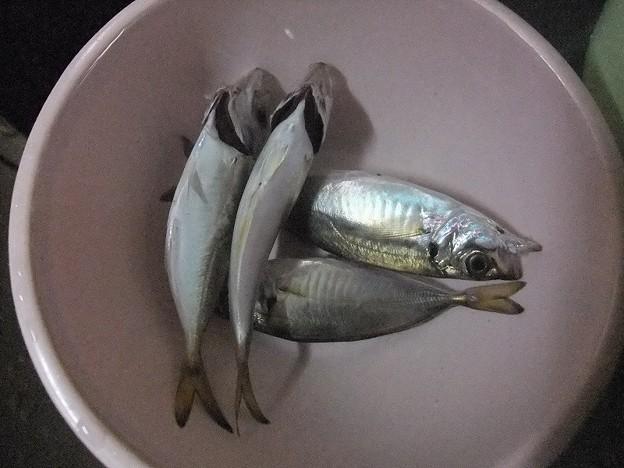 12 アジ釣り