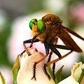 写真: 緑の目が目立っています(^^)