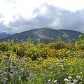Photos: 山とお花畑
