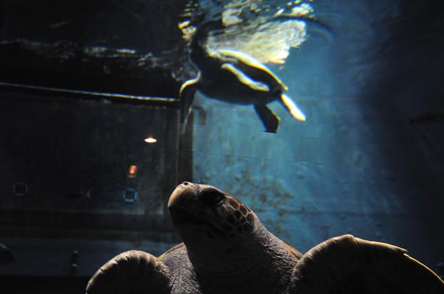 Photos: 海遊館