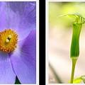 野草の花たち~P2