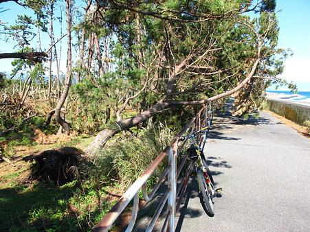 倒木、台風の爪痕