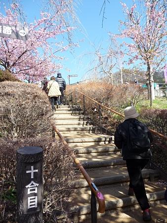 110305-松田山 河津桜 (81)