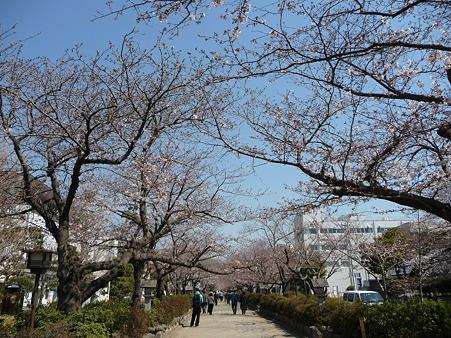 110406-八幡さま (3)