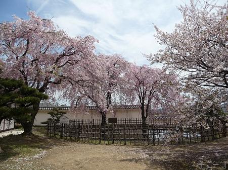 110417-姫路城 (198)