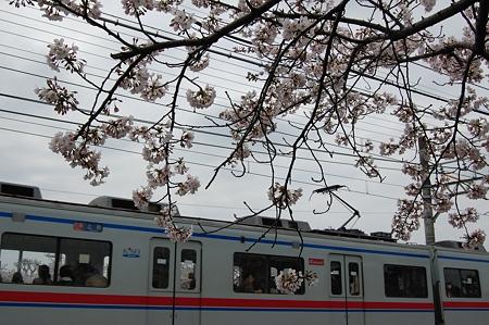 桜と京成電車
