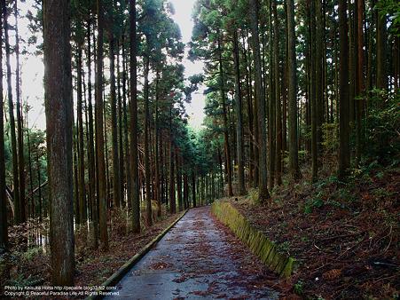 神明社近くの道