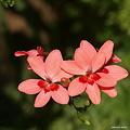 写真: 201105flower 365
