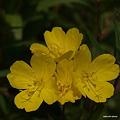 写真: 201105flower 378