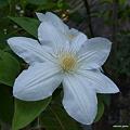 写真: 201105flower 380